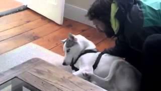 Un chien dit nonà son chenil