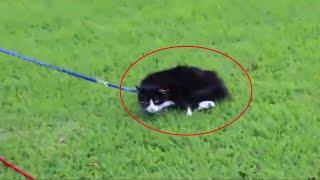 O Gato Mais Preguiçoso Do Mundo